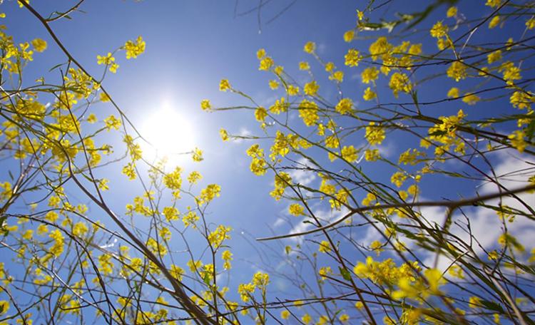 巢湖春天风景图片
